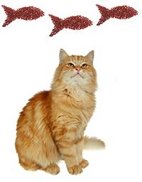 Hur förebygger man hudproblem hos katter?