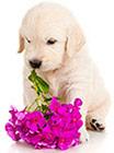 Miljöallergi hos hundar