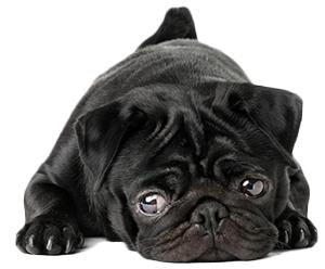 Vad är ångest hos hundar?