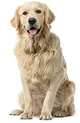 Att förebygga ångest hos hundar