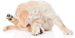 Hudallergi hos hundar
