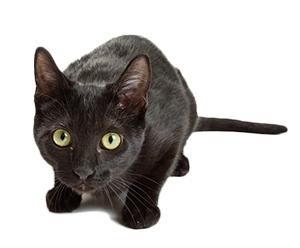 Vad är ångest hos katter?