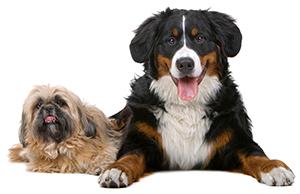 Hur förebygger man hudproblem hos hundar?