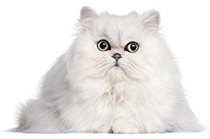 Hur tar man hand om kattens hud & päls?