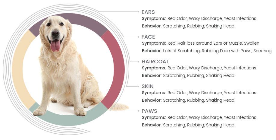 Symtom hos allergiska hundar