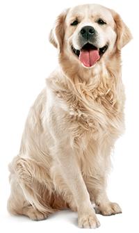 Hur tar man hand om hundens hud & päls?