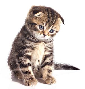 Behandling av ångest hos katter