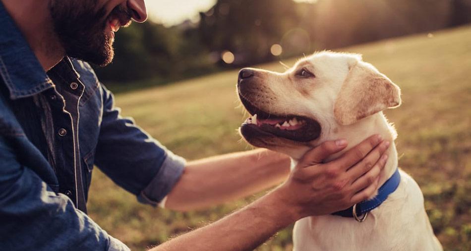 Som hundägare så finns det mycket du kan göra för att förebygga urinvägsinfektioner. En metod att använda dig av tranbär.