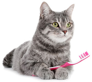 Tandproblem hos katter