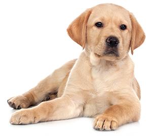 Tillskott för hundens lever, njurar och bukspottkörtel
