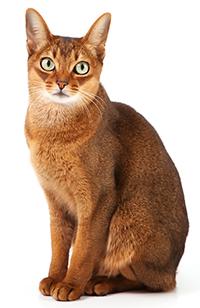 Vad gör min katts njurar?