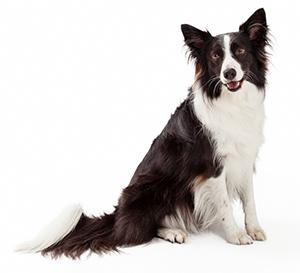 Vitamintillskott till hundar