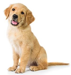 Hur tar man hand om hundens hud?