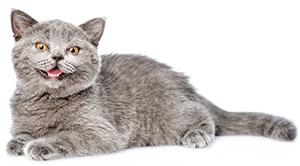 Vilket är bästa sättet att bli av med en fästing på katten?