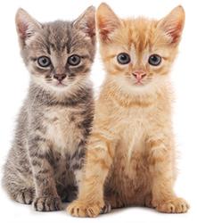 Förebyggande åtgärder för kattens hjärnhälsa