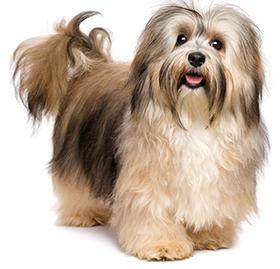 Vilka hudproblem drabbas hundar av?