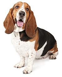 När tandvård för hundar blir hälsovård för hundar