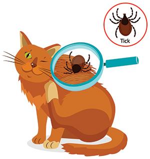 Symptom på fästingar på katten