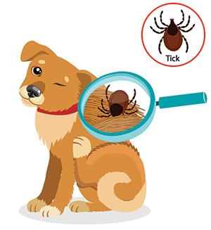 Fästing på hund symptom