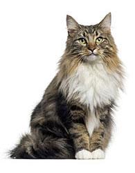 Behandling mot loppor och fästingar på katter