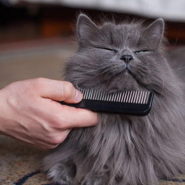 Hur du tar hand om kattens päls