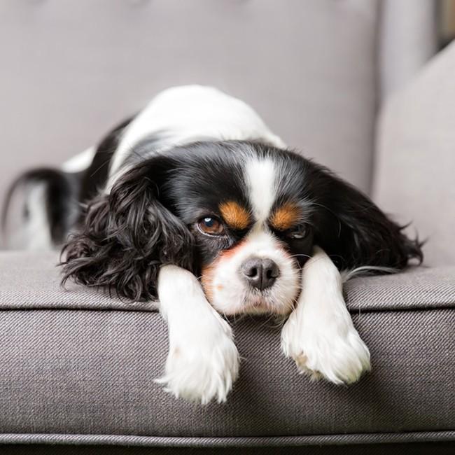 10 vanliga hudproblem hos hundar