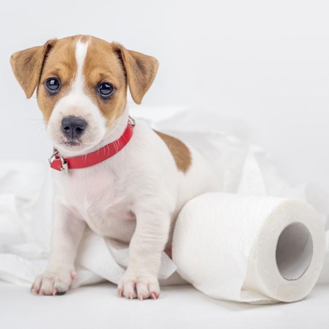 Hund Med Diarré, Vad Gör Man?