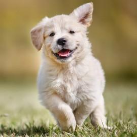 Artros hos hundar