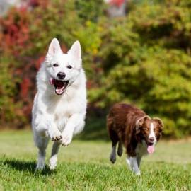 Glukosamin för hundar, varför är det så viktigt?