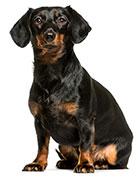 Slutsatser om diarré hos hundar