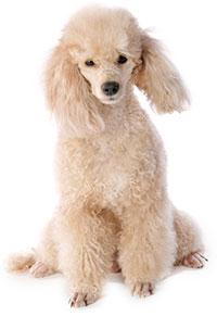 Hund Med Förstoppning, Vad Gör Man?