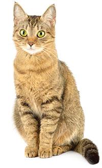 Vad är separationsångest hos katter?