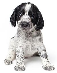 Förstoppad hund symptom