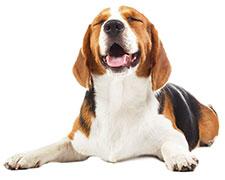 Bör jag ge min hund fiskolja?