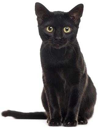 När ska man avmaska katten?