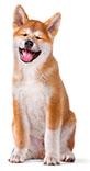 Förebyggande tandvård för hundar