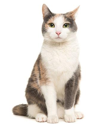 Vad är mask hos katter?