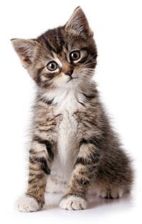 Symptom på att din katt lider av separationsångest