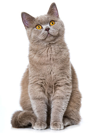 Vad är allergi hos katter?