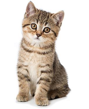 Hur kan man förbättra kattens matsmältning