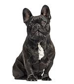Varför ska man rengör hundens öron?